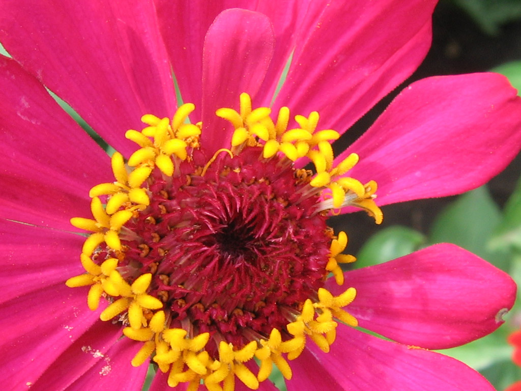 http://roxgallery.narod.ru/foto/flower9.jpg